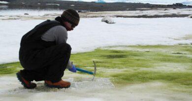 Το χιόνι γίνεται πράσινο (Photos)