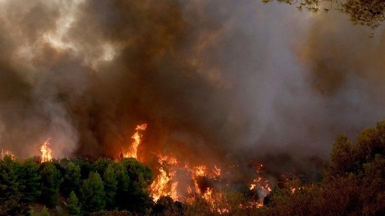 Εκκένωση της Ελαίας Φωκίδας λόγω δασικής πυρκαγιάς